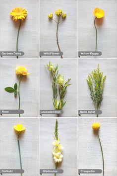 Kvety- názvy