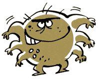 Dr Pet: Pulgas e Carrapatos - Dicas naturais