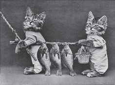 Harry Whittier Frees / baby animals / dogs and cats in clothes / miniatures I Love Cats, Cute Cats, Funny Cats, Funny Animal, Cat And Dog Photos, Pet Photos, Baby Animals, Cute Animals, Wild Animals