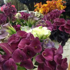 Flower mart mini callas