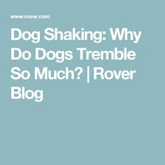 Dog Shaking: Why Do Dogs Tremble So Much? | Rover Blog