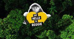 Kosmetikkæden The Body Shop kører i øjeblikket en kampagne med aben Reggie som hovedperson. Den har