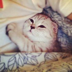 Спокойной ночи / Goodnight #самаямилаяфоточкадня - @s_nik- #webstagram