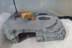 crested gecko leopard gecko beardie reptile by Herphomes