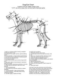 Jin Shin Jyutsu Neuseeland - Sicherheits-Energieschlösser beim Hund