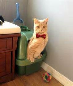 +iggy azalea using the toilet - Bing Images