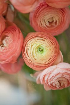Ranunculus are a great fun and beautiful addition to any arrangement