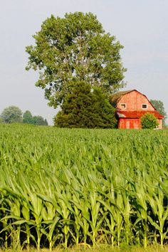 Late summer in Wayne County, Indiana.