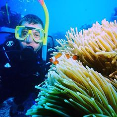 Life on the Great Barrier Reef finding nemo #GBR #greatbarrierreef #dive #scubadiving #clownfish #findingnemo #nemo #australia #cairns #tusat6 #goals #dream #life #adventure #makeithappen #happy #me #love #bucketlist #travel #world #takemeback by jas8688 http://ift.tt/1UokkV2