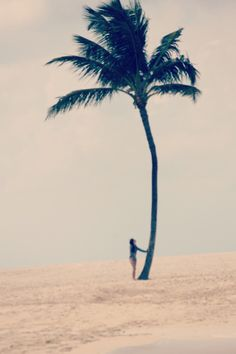 palm tree silhouette on sand - cloudy