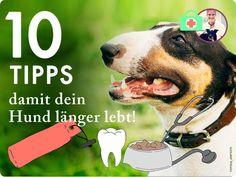 10 Tipps damit dein Hund lange lebt: Ein gesunder Hund bis ins hohe Alter