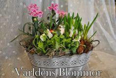Vårplantering från Världens Blommor i Landskrona www.varldensblommor.se
