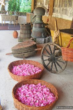 Image from The Museum of the Rose Bulgaria of rose harvesting. Part of the process of creating Rosewater and Rose Otto. South East Europe, Paris France Travel, Rose Oil, Black Sea, Bulgarian, Morocco, Rose Images, Perfume, Argan Oil