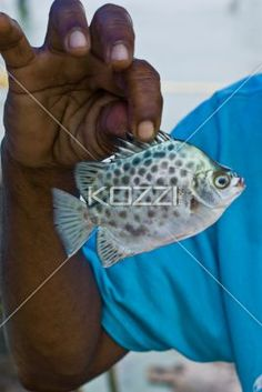 Small Fish - A man holding a small, salt-water fish by its fins.