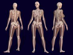 Female Skeleton Anatomy - Pierre A. Riffard - Wikipedia, the free encyclopedia Anatomy Bones, Body Anatomy, Anatomy Art, Pelvis Anatomy, Girl Anatomy, Anatomy Images, Female Skeleton, Women Skeleton, Drawing Techniques