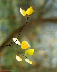Color fine art photography fall fine art by IonAnthosPhotography