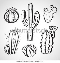 Ink style hand drawn sketch set - cactus set - stock vector