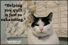 Funny Quilting Memes to Share Quilt Labels, Fabric Labels, Quilting Room, Quilting Tips, Funny Captions, Funny Memes, Sewing Humor, Quilting Quotes, Jellyroll Quilts