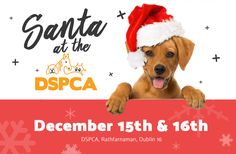 What could be more wonderful than visiting Santa, surrounded by animals, nestled in the picturesque setting of the Dublin mountains? Visit Santa, Local Events, Dublin, Activities