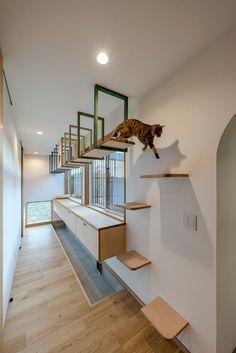 Diy Cat Tower, Cat Wall Furniture, Cat Gym, Cool Cat Trees, Pet Hotel, Cat Playground, Cat Shelves, Cat Enclosure, Cat Condo