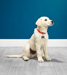 Make your dog feel special. Personalize a pet tag for your furry friend at Shutterfly.com