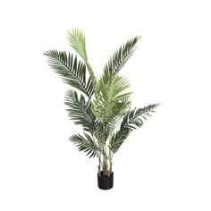 We like the elegant and airy look of this palm tree. You will be charmed by its long leaves that give it an elegant silhouette. It requires no maintenance and will keep all its beauty for many years! Nothing To Envy, California Palm Trees, Travellers Palm, The Imitation, Green Plants, Artificial Plants, Decoration, Houseplants, Indoor Plants