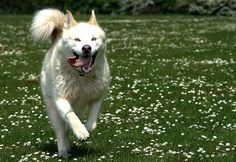 The Best, Most Sensible Way to Get Your Dog Back in Shape