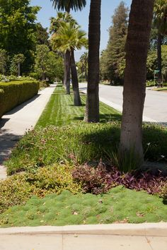 Why water the parkway?  Plant low-water plants, install drip irrigation and forget about it!