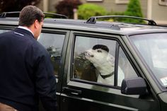 What would you do if you saw a dog in a car on a hot day? take our poll