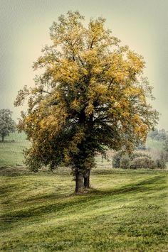 automnechenejpg - null