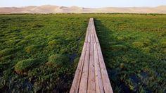 Bing Image Archive: Bridge over marshland near the Khongoryn Els sand dunes in the Gobi Desert, Mongolia (© Franck Guiziou/Hemis/Corbis)(Bin...