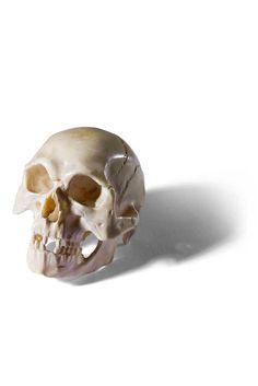 Anatomisches Schädelmodell. Detailgetreue vollplastische Schnitzerei. Elfenbein. Wohl Nürnberg, 18. Jh. L 4 cm. Kleine Schädel aus Elfenbein dienten als medizinisches Anschauungsmaterial, fanden jedoch ihren Platz auch als 'Memento Mori' in Kunstkammern, wo sie den Betrachter - gleich welcher Stellung - an die Endlichkeit des Seins erinnern sollten. -AUKTIONSHAUS MICHAEL ZELLER-
