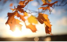 Download Wallpaper x Macro Branches Light Glare Leaves
