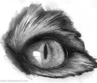 animal eye drawing