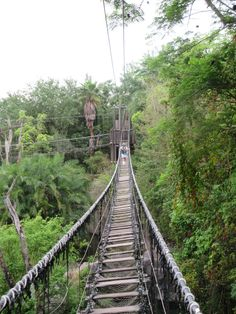 The Wild Africa Trek is a tour at Animal Kingdom that puts you right up close to the animals on the Harambe Wildlife Reserve. Learn all about it in this article. #disneyworld #dvcrentals #WDW