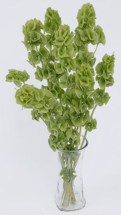 "Bells of Ireland | Tall and green, they add height and linear appeal to large floral designs.  Some stems tend to curl.  In the language of flowers, they mean ""good luck""."