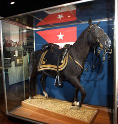 Major General Philip Henry Sheridan's horse  Reizni renamed Winchester after Sheridan's famous ride at the Battle of Winchester