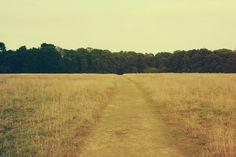 landscape field path