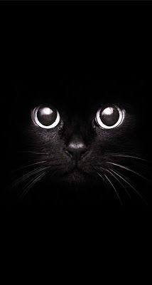 Papel de Parede Fundo Gato Preto para Celular e iPhone Black / Wallpaper