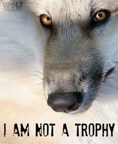 "My Pack of Wolves on Twitter: ""https://t.co/HeoV6KhSJE"""