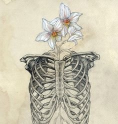 Anatomy Orchid Rib Cage Watercolor Drawing via Etsy