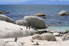 Boulder's Beach, Simon's Town, South Africa © Jenniflowers