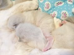 里親さんブログ少し成長したかな? - http://iyaiya.jp/cat/archives/71211