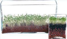 Cómo usar semillas de chía para mejorar la salud | eHow en Español