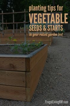 Tips for planting vegetable seeds & starts in your raised garden bed