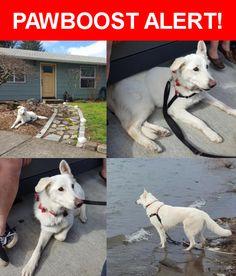 Please spread the word! Lyla was last seen in Vancouver, WA 98684.    Nearest Address: Near NE 11th Cir & NE 124th Ave