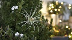 To cut down on waste, use decorations you can put right back into the earth.