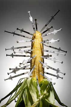 STRONG IMAGE: The Health Risks of Genetically Modified Corn