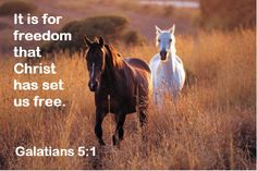 8x10 Horse Picture with Scripture
