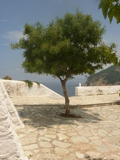 Lonely Tree, Skopelos | Flickr - Photo Sharing!